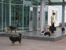Dogs at train station in Ukraine