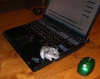 Hamster meets computer mouse