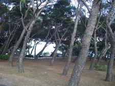 Pine-Garden-225x169